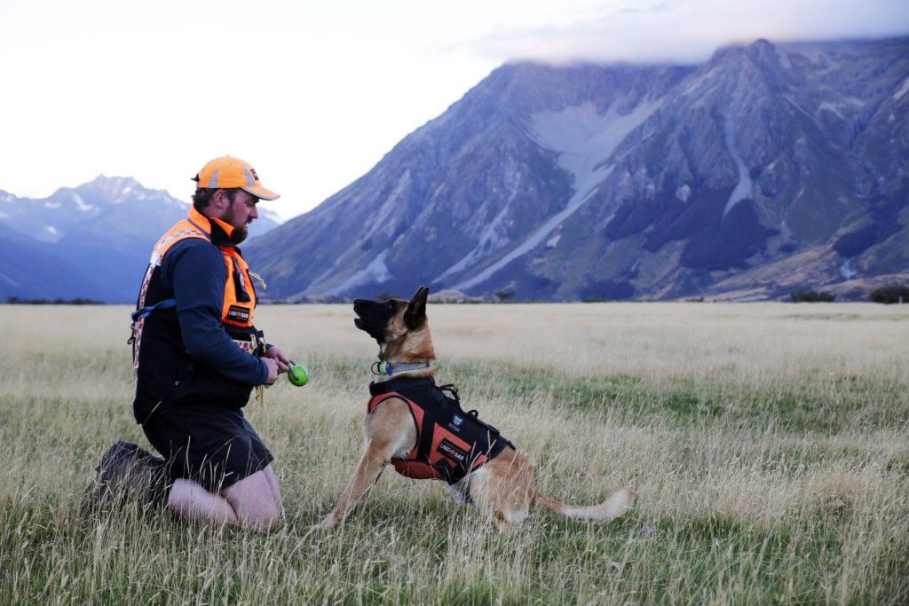 Wilderness Search Dog